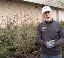Spring Pruning Tips Monday, May 18, 2020